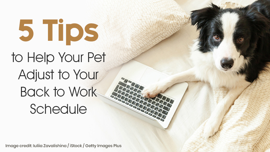 Help Your Pet Adjust to Your Back to Work Schedule